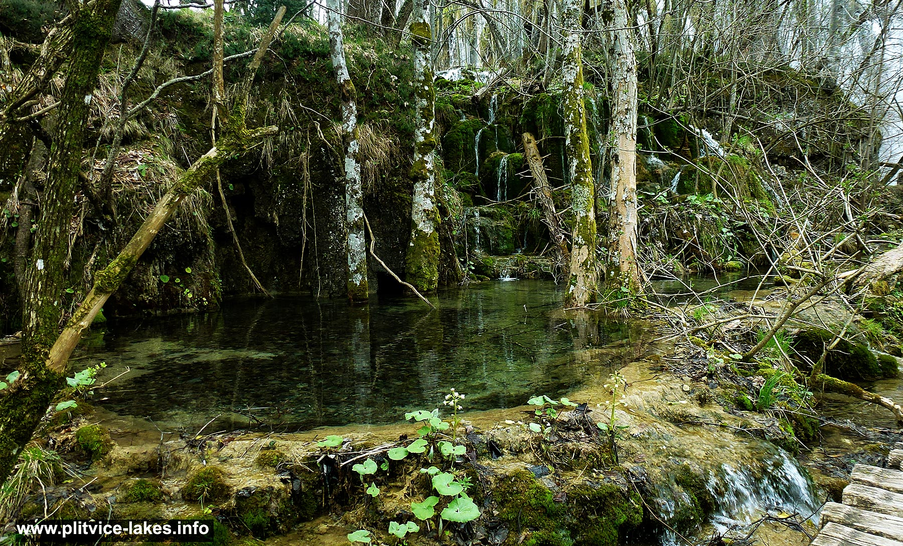 Ancient woodlands add texture, colour and variety to lovely Plitvice walk in the spring