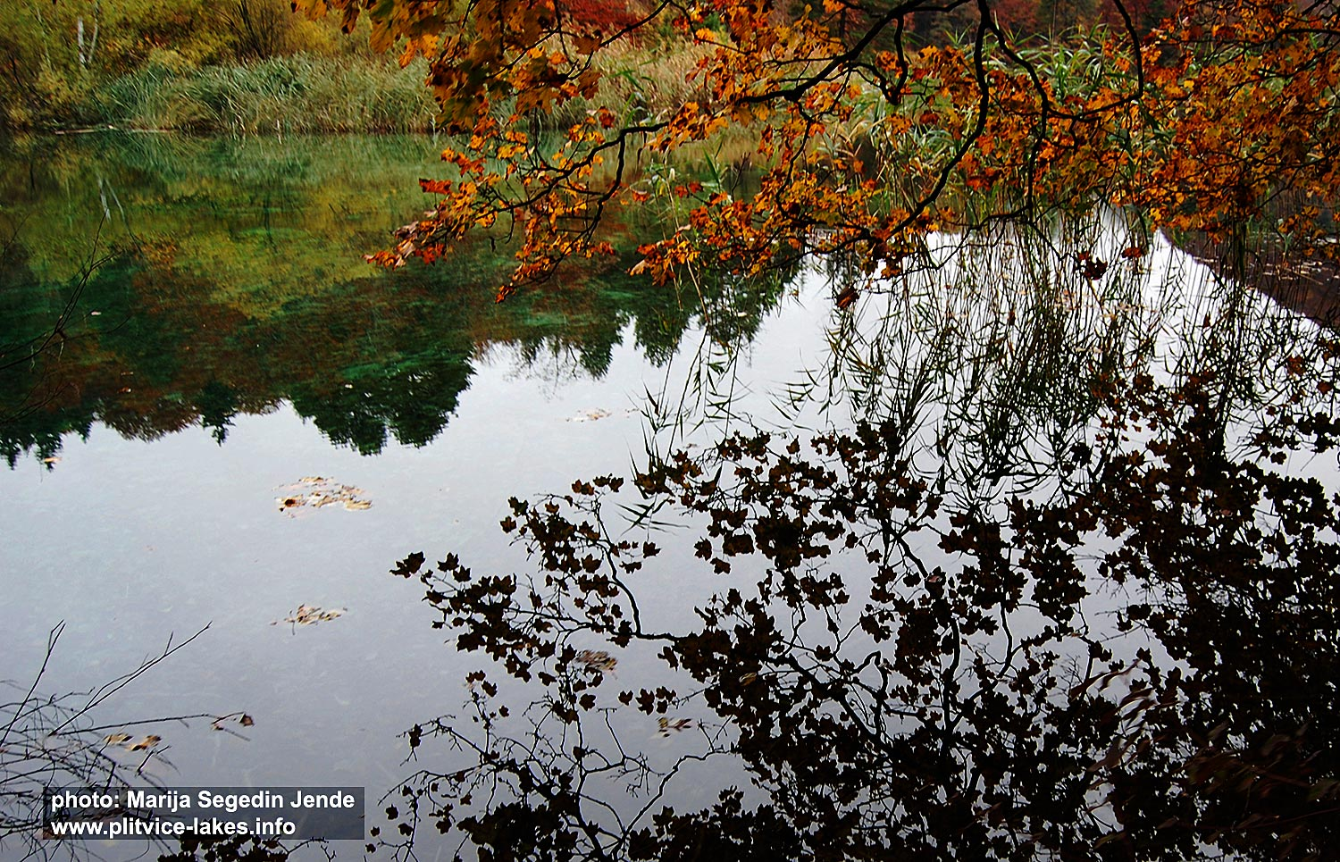 Reflections in water in Vir jezero (Lake) - Plitvice National Park